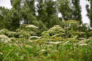 veld bloemen foto
