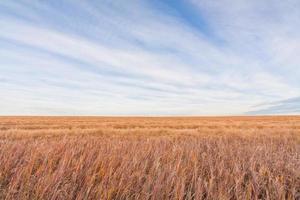 prairiegrasland