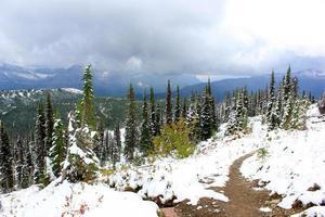 top van de palmbomen in Glacier National Park Montana foto