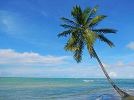 scheve palmboom op het strand van las terrenas, schiereiland samana foto