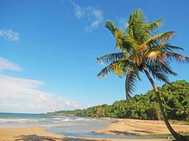 palmboom op een strand, playa el limon, dominicaanse republiek