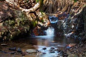 kreek in het palmenbos van San Andrà © foto