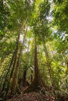 majestueus regenwoud van Borneo van onderaf
