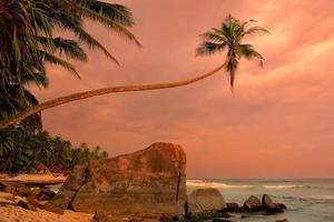 scheve palmboom met grote rotsen bij zonsondergang, Unawatuna-strand