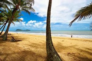 zeegezicht met palmen foto