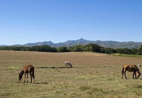 platteland, vallei van de ingenios, cuba