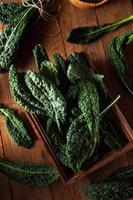 biologische groene lacinato boerenkool