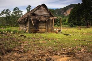 tabaksplantage in de vallei van vinales, cuba. foto