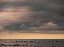 corcovado nationaal park - costa rica foto