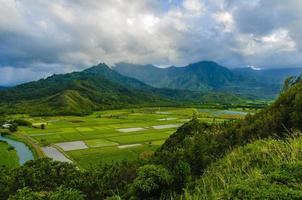 met uitzicht op de taroboerderijen in de Hanalei-vallei, Kauai, Hawaï, VS.