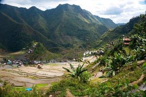 rijstplantages