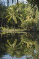 reflectie in de waterput van het regenwoud foto