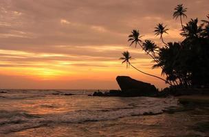 silhouet palmbomen en rotsen bij zonsondergang, unawatuna, sri lanka