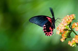 vlinder in beweging foto