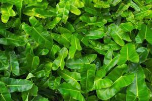 textuur van groene bladeren met grappige vorm