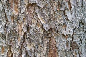 boomschors textuur
