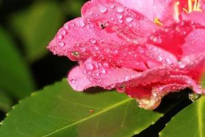 waterdruppels op bloem