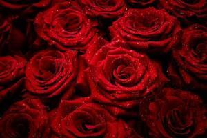 rozen met druppels water
