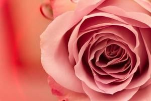 roze roos op gekleurd water. foto