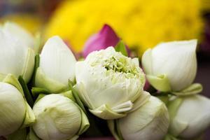 gevouwen bloemblad lotus waterlelie