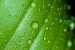 bladeren met druppels water groen foto