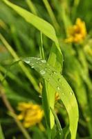 waterdruppels op een blad.