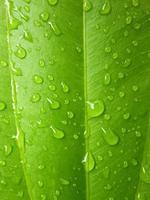 druppel water op blad foto