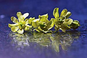 gele bloemen weerkaatst sproeiwater