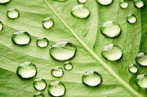 groen blad met druppels water
