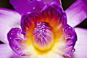macro lotus.