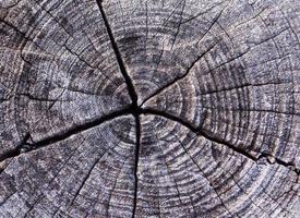 textuur van oud hout, natuurlijke textuur close-up foto