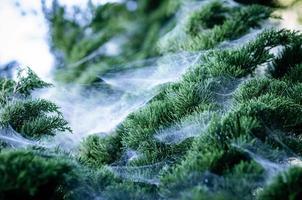 spinnenweb op de den