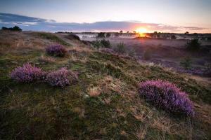 zonsopgang boven heuvels met heide foto