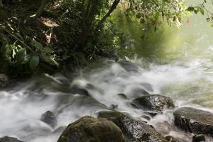 stroom in het bos foto