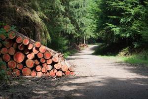 bosbouw in Vulkaneifel (Duitsland)