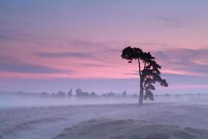 dennenboom silhouet bij roze mistige zonsopgang