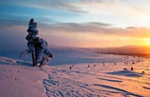 boom bij zonsondergang in de winter