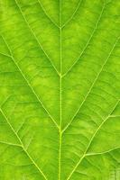 textuur van groen blad