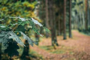 eikenbladeren in een bos