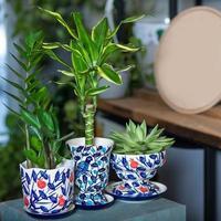 verschillende planten in kleurrijke potten foto