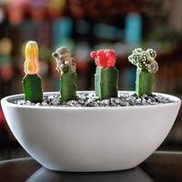 mooi klein terrarium met vetplanten foto