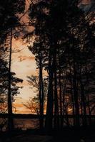 silhouet van bomen onder bewolkte hemel tijdens zonsondergang