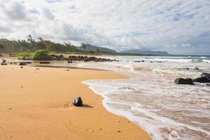 de kokosnoot op het strand in Kauai, Hawaï