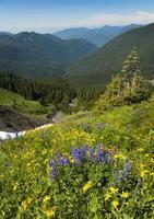 alpine wilde bloemen foto