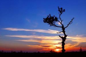 zonsondergang met eenzame boom