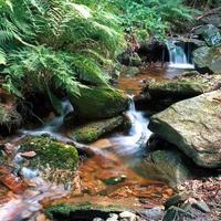 serene waterstroom omringd door varens en stenen