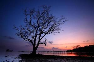 tropische, eenzame boom