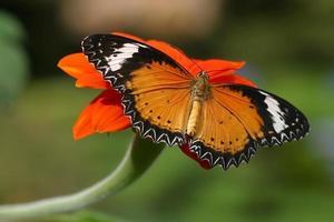 vlinders op bloemen foto