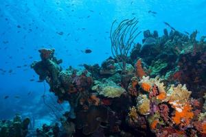 koraalrif met bruine chromis foto