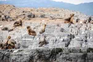 dieren op het beagle-kanaal, tierra del fuego foto